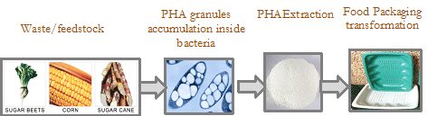 The EuroPHA process for PHA bioplastic productio